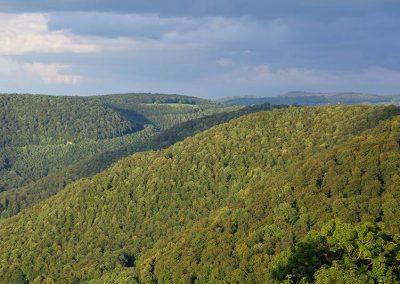 Wald Vordere Alb